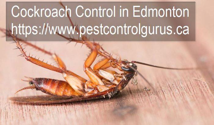 Cockroach Removal Company in Edmonton, Alberta