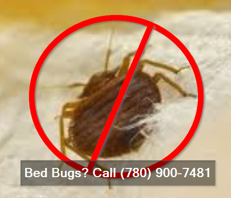 bed bugs call (780) 900-7481
