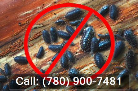 sow bugs call (780) 900-7481