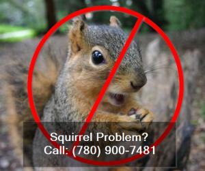 squirrel-exterminator-edmonton