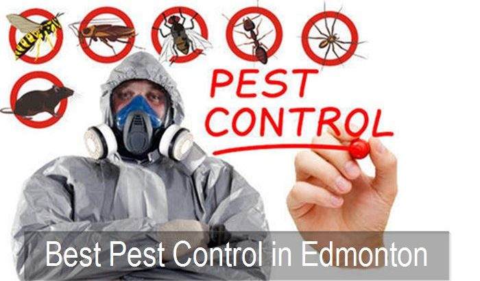 Ultimate Pest Removal Company in Alberta