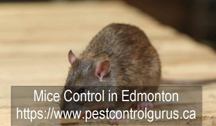 mice control in edmonton alberta